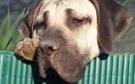 Anorexia canina y consejos para ayudar a tu perro