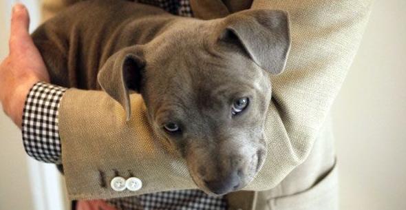 Lo negativo de cargar a los perros en brazos