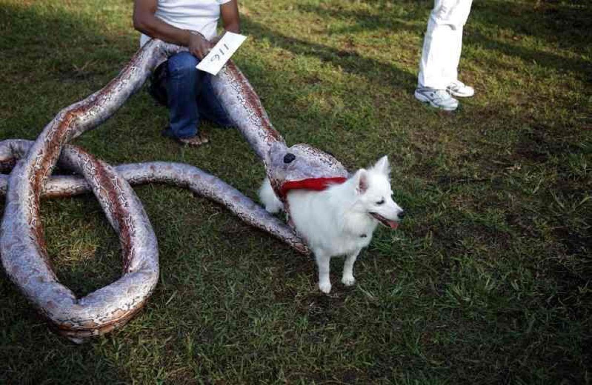 disfraces-caseros-para-mascotas-halloween-presa-de-serpiente - Canal ...