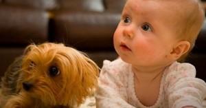 Los bebés que conviven con mascotas mejoran su sistema inmunológico