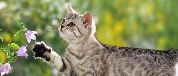 Conoce las plantas tóxicas que ponen en peligro a los gatos curiosos