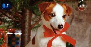 Consejos para antes de regalar una mascota a tu niño en Navidad