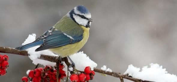 Consejos para cuidar a los pájaros llegado el invierno
