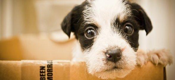 Adoptar perros, diferencias entre los machos y hembras