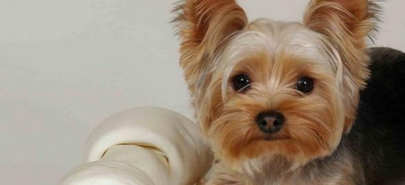 Mejores fotografías de perros traviesos y sus travesuras