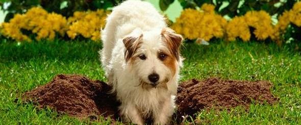 Mi perro hace agujeros en la tierra canal mascotas for Ahuyentar perros del jardin