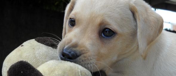 Quiero educar a mi perro cuándo debo comenzar con su aprendizaje