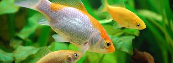 Ambiente cálido para tus peces