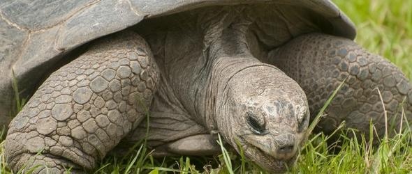Conoce la edad de las tortugas