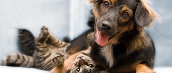Consejos para que tu perro no ataque al gato