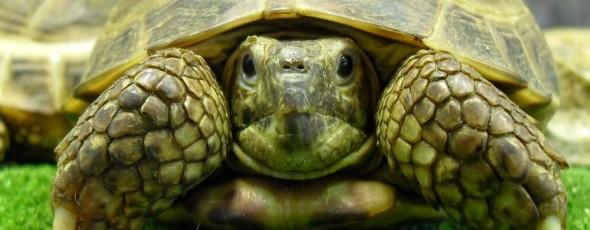 Cuida mejor a tus tortugas