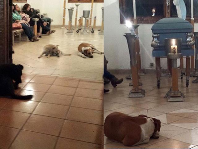 Perros callejeros le dicen adiós a su protectora 2