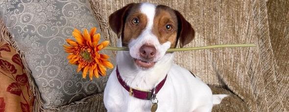 Perros callejeros le dicen adiós a su protectora