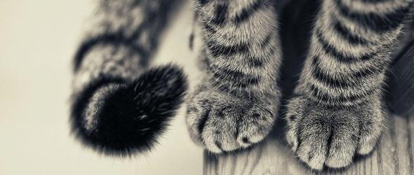 Porqué se muerde la cola un gato