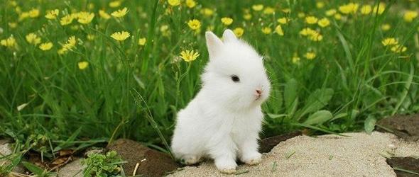cuidados de conejos recien nacidos