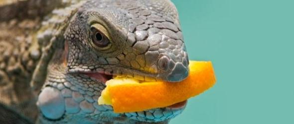 El estrés y la alimentación en los reptiles
