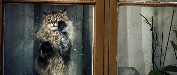 Inspiradoras fotos poeticas de animales mirando por la ventana