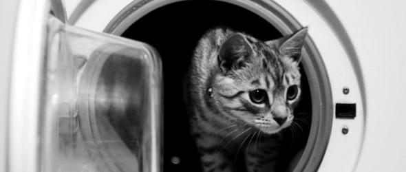 Peligros para los gatos dentro de la casa