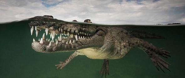 curiosas fotografías de animales sobre y bajo el agua