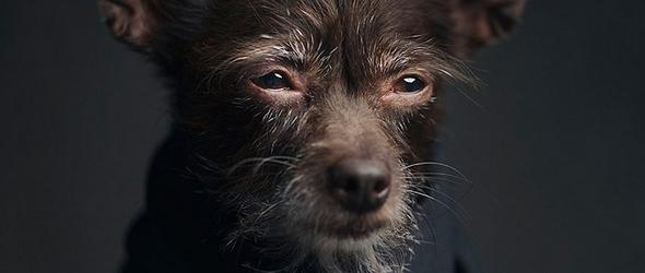 hermosas fotos de animales retratados con reflexion a humanos