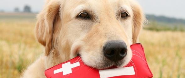 App de los Primeros Auxilios para la mascota