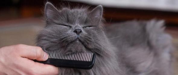 Cepillar el pelo del gato en verano
