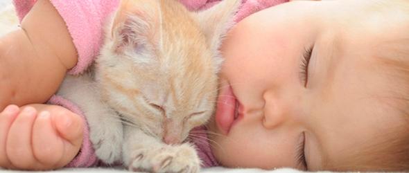 El gato y la llegada del bebe
