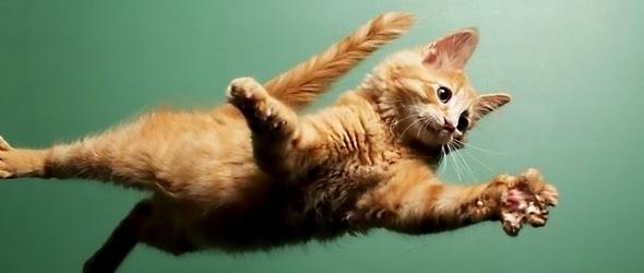 Entendiendo el síndrome del gato paracaidista