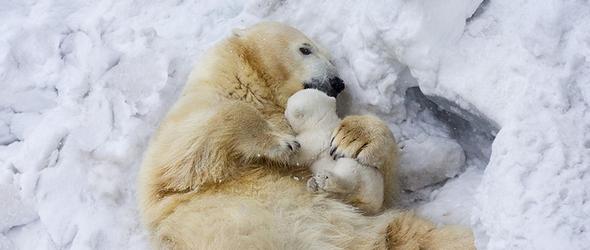 Impresionantes fotografías de animales en familias