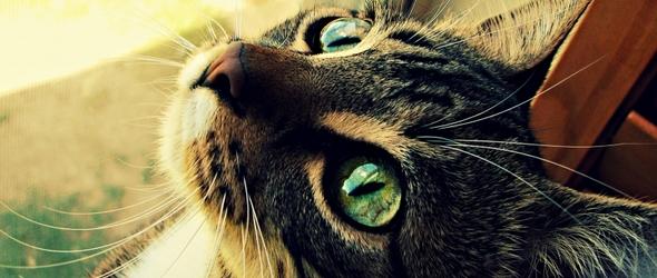 La cola los bigotes y las orejas del gato como medios de comunicacion