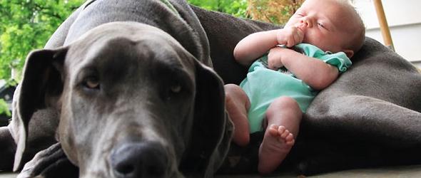 Llegada del bebe  consejos para presentar al bebe  al perro