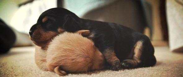 Mejores fotografías de cachorros dormidos donde se antoje
