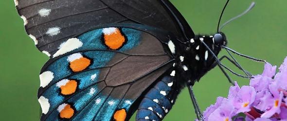 Mejores fotografías de mariposas antes y despues de la metamorfosis