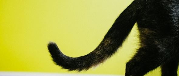 Porqué mi gato se muerde la cola