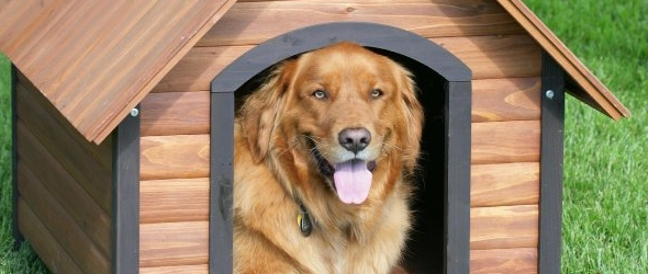 Consejos para construir la primera casa para perros