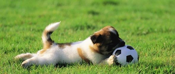 El juego en los perros como medio de educación