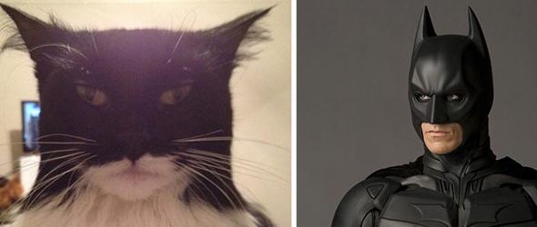 Fotografías graciosas de gatos que se parecen a personajes y otros objetos