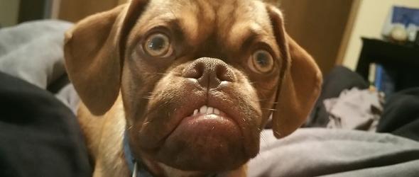 Fotos graciosas de Earl, el perro Grumpy Dog de aparente enfadado