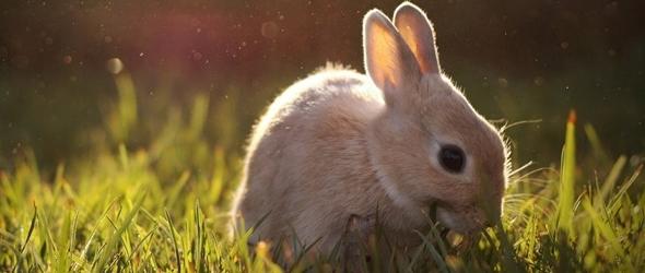 Hermosas fotografías de conejos cómo cuidar al conejo