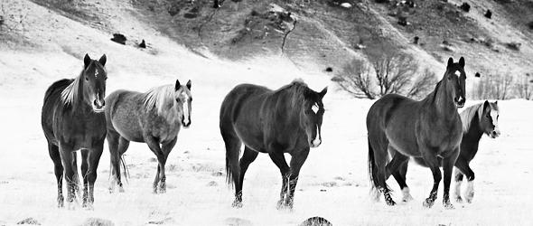 Mejores fotografías de caballos salvajes tomadas por Troy Moth