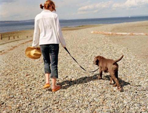 Adiestra al perro para que camine a tu lado