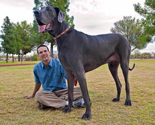 Adoptar un perro de raza grande - Canal Mascotas