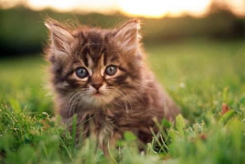 Ailurofobia, el miedo intenso a los gatos