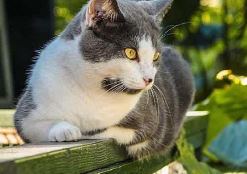 Nuestras mascotas perros gatos p jaros y m s canal for Ahuyentar gatos de mi jardin
