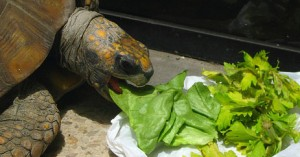 alerta-si-la-tortuga-no-quiere-comer_xti9e