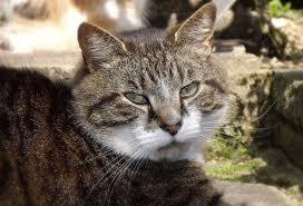 Alimentaci n para gatos esterilizados canal mascotas - Alimento para gatos esterilizados ...