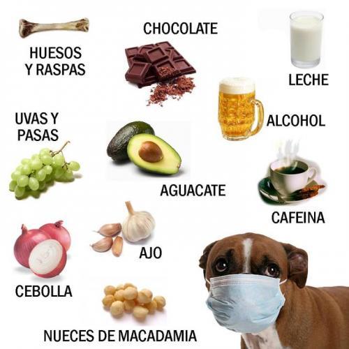 Alimentos no recomendados para los perros canal mascotas - Alimentos recomendados para perros ...