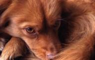 alzheimer-canino_3qjot