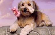 amando-tu-vida-podras-amar-la-vida-de-las-mascotas_wirmq