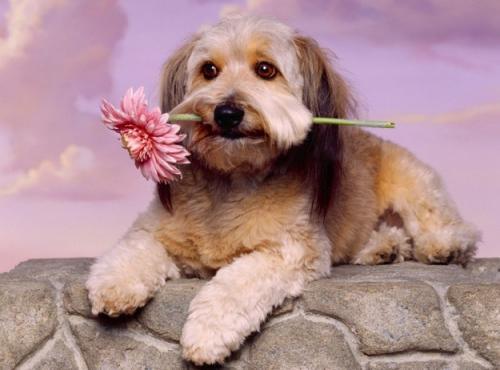 Amando tu vida podrás amar la vida de las mascotas